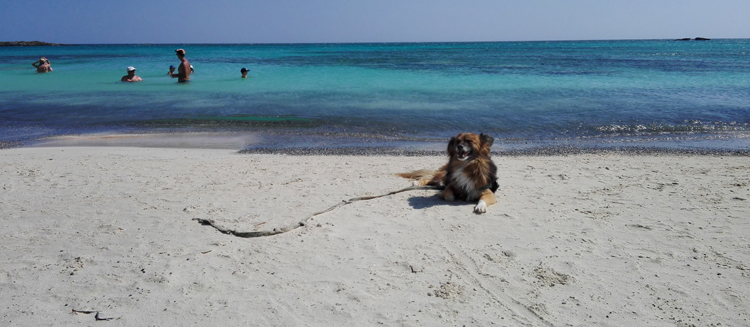 dog_elafonissi_beach